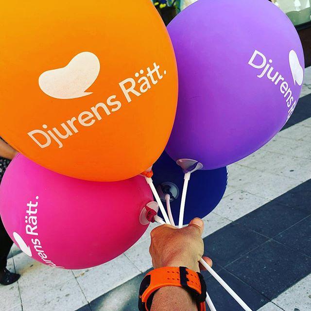 Ballonger med ett budskap. ️