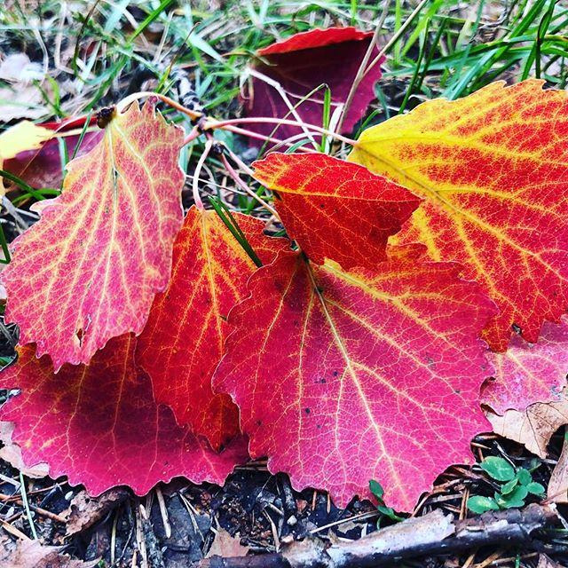 Och färgerna. Har vi pratat om dem? Höstens färger. De lägger sig så fint i ögonen och magen.