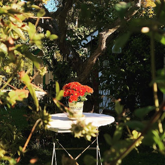 En liten blomma i en trädgård. En radio som hörs i bakgrunden. Någon dricker kaffe.